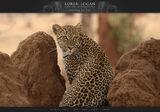 Loren Logan