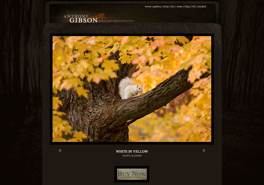 """""""If you are thinking of building photography website, then do yourself a favor and contact these guys! Working with them was..."""