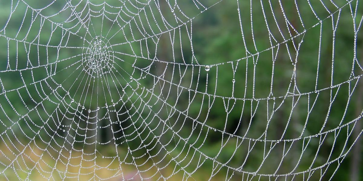 The World Wide [Spider] Web